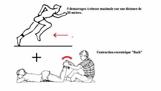 entrainement-excentrique-et-dommages-musculaires-1