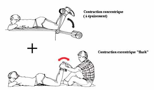entrainement-excentrique-et-dommages-musculaires-2