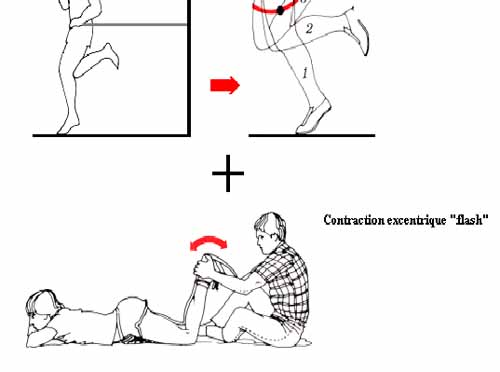 entrainement-excentrique-et-dommages-musculaires-3