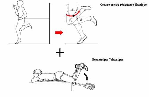 entrainement-excentrique-et-dommages-musculaires-4