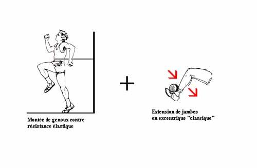 entrainement-excentrique-et-dommages-musculaires-5