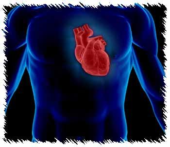 frequence cardiaque cible avec la methode de karvonen fc astrand