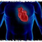 Déterminez votre fréquence cardiaque cible avec la méthode de Karvonen
