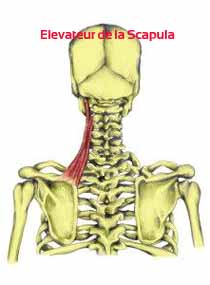 gainage-core-stability-elevateur-scapula