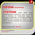 Cystéine acide aminé composant la myosine