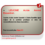 Leucine Acide Aminé Essentiel à Chaîne Ramifiée stimule la synthèse protéique