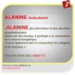 Alanine Acide Aminé producteur d'énergie