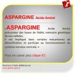Aspargine acide aminé détoxifiant