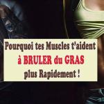 Pourquoi La Masse Musculaire Aide à Brûler Du Gras Rapidement? | Taux De Graisse